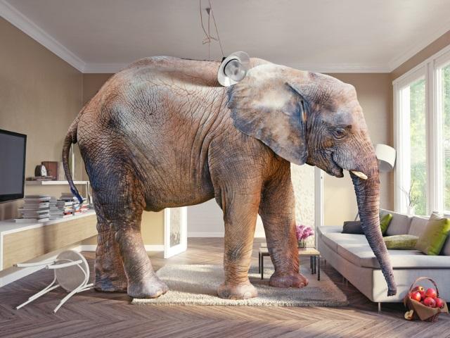 O elefante na sala de estar